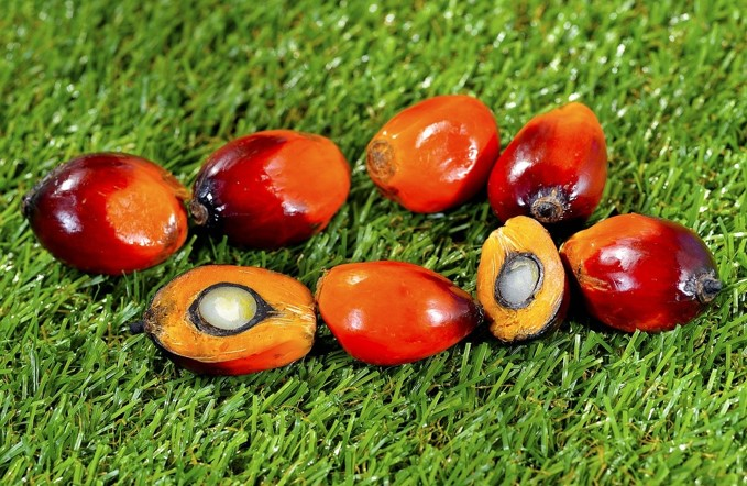 Sustainable Palm Oil Products
